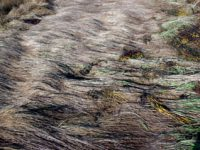 alexandra reill: algae and grasses. V, 20091007_grasses_III_2. 2009