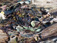 alexandra reill: algae and grasses. IV, 20091007_grasses_II_3. 2009