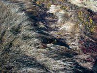 alexandra reill: algae and grasses. V, 20091007_grasses_III_3. 2009