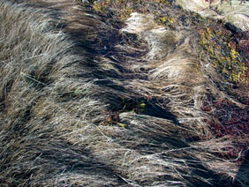 alexandra reill: algae and grasses. V, 20091007_grasses_III_3. 2009