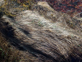 alexandra reill: algae and grasses. V, 20091007_grasses_III_4. 2009