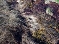 alexandra reill: algae and grasses. V, 20091007_grasses_III_5. 2009