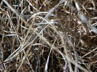 alexandra reill: algae and grasses. VI, 20091007_grasses_IV_7. 2009